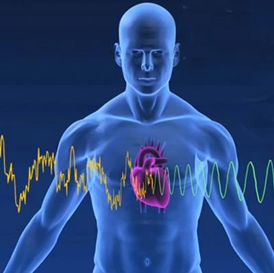 Das Gehirn in unserem Herzen Herz_heartmath