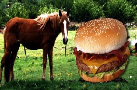 hamburger-pferde-fleisch
