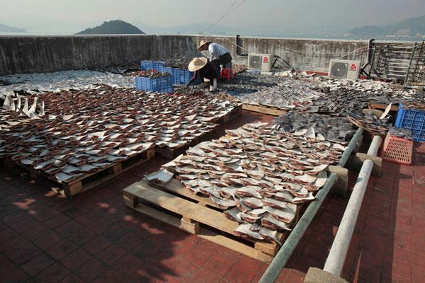 hongkong-haiflossen