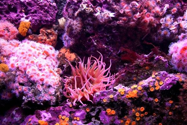 korallen-Great-Barrier-Reef1