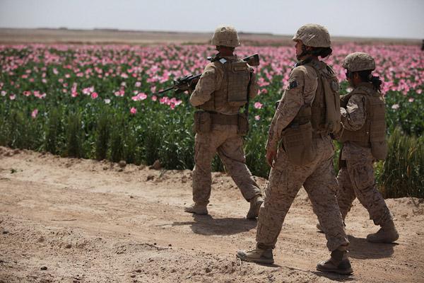 nato-drogen-felder-afghanistan