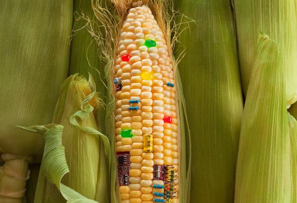 genetisch-veranderter-mais-lebensmittel-monsanto