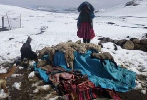 peru-bolivien-kaelteeinbruch-tote-tiere
