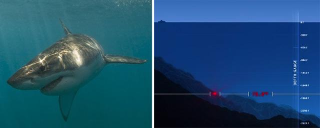weisser-hai-monster-unterwasser-australien